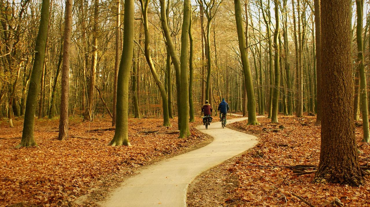 Vakantie Nederland Veluwe bos fietsen